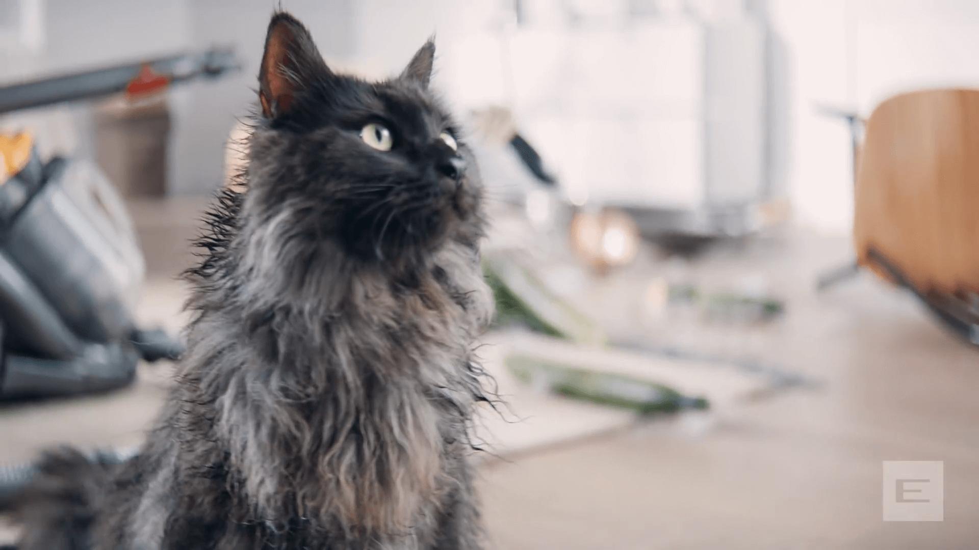 ETERNA #dontshare – Der Katzen-Parcours.mp4.00_00_38_14.Standbild005